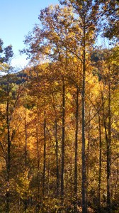 The colors of the fall leaves represent only the colors in sunlight which are reflected. All of the other colors in sunlight are absorbed by the leaf. It is each, reflected or absorbed light, which defines the other.
